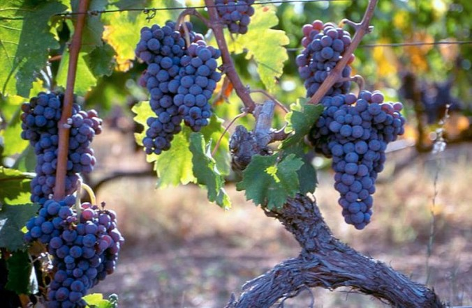 Image courtesy of Greek to Me! http://www.greek2m.org/wines-like-nectar